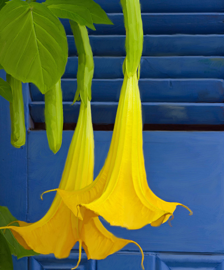 yellow flower blue wall