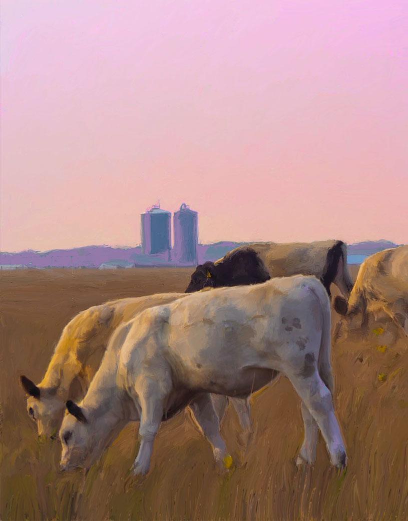 katama-cows